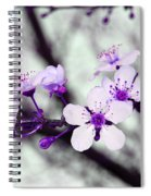Purple Pink Blossoms Spiral Notebook