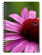 Purples And Reds Spiral Notebook