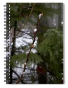 Pussy Willow In The Pines Spiral Notebook