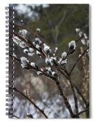 Pussy Willow In The Rain Spiral Notebook