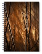 Pussy Willows In The Warm Sunlight Spiral Notebook