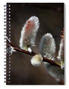 Pussy Willows Spiral Notebook