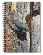 Pygmy Nuthatch At Nest Spiral Notebook