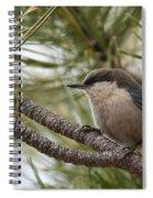 Pygmy Nuthatch Spiral Notebook