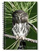 Pygmy Owl Spiral Notebook