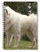Pyrenean Mountain Dog Spiral Notebook