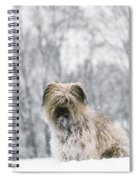 Pyrenean Shepherd Dog Spiral Notebook