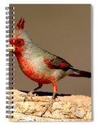 Pyrrhuloxia Cardinalis Sinuatus Male Spiral Notebook