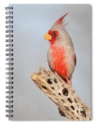 Pyrrhuloxia On Cholla Rib Spiral Notebook