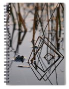 Pythagoras The Frog Spiral Notebook