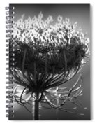 Queen Annes Lace - Bw Spiral Notebook