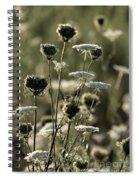 Queen Annes Lace - 1 Spiral Notebook