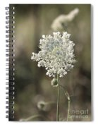 Queen Annes Lace - 3 Spiral Notebook
