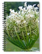 Queen Anne's Lace Flower Unfolded Spiral Notebook