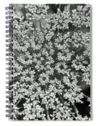 Queen Anne's Lace In Black And White Spiral Notebook