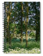 Queen Anne's Lace Makes A White Carpet In The Woods Near Rutland Spiral Notebook