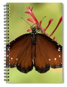 Queen Butterfly Spiral Notebook