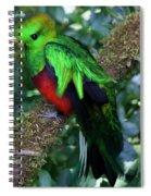 Quetzal Spiral Notebook