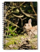 Rabbit In The Woods Spiral Notebook