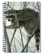 Up A Tree Spiral Notebook
