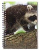 Raccoon Baby Spiral Notebook