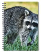 Raccoon Buddy Spiral Notebook