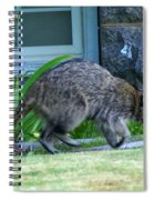Raccoon In Flight Spiral Notebook