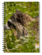 Raccoon In The Meadow Spiral Notebook