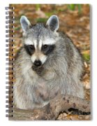 Raccoon Procyon Lotor Adult Foraging Spiral Notebook