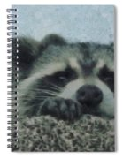 Raccoons Painterly Spiral Notebook