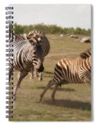 Racing Zebras 1 In Color Spiral Notebook