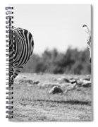 Racing Zebras Spiral Notebook