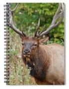 Racked Roosevelt Elk Spiral Notebook