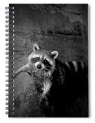 Racoon Bandit Spiral Notebook
