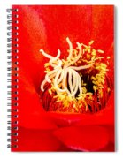 Radiant Red Cactus Flower Spiral Notebook