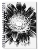 Radiant Solarized Spiral Notebook