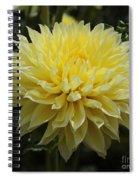 Radiant Yellow Dahlia Spiral Notebook