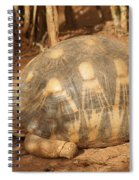 radiated tortoise from Madagascar Spiral Notebook