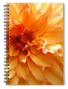 Radiating Orange Dahlia Spiral Notebook