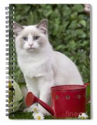 Ragdoll Cat Spiral Notebook