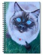 Ragdoll Spiral Notebook