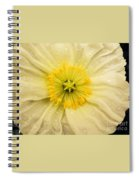 Rain Drenched Yellow Poppy Spiral Notebook