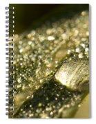 Rain Drop Spiral Notebook