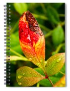 Rain Drops On Colorful Leaf Spiral Notebook