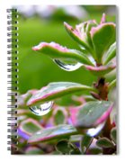 Raindrops On Sedum Spiral Notebook