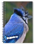 Rain Jay Spiral Notebook