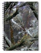 Rain On Pine Needles Spiral Notebook