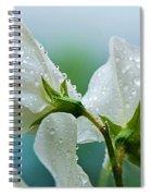 Rain On Sweet Peas Spiral Notebook