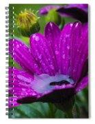 Rain Shower Spiral Notebook