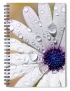 Rain Soaked Daisy Spiral Notebook